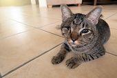 Blind Cat Has One Eye. Injured Kitty poster