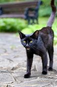 Mystical Black Cat On The Pavement. A Thin Black Stray Cat Asks For Food. Black Panther On A Stone R poster