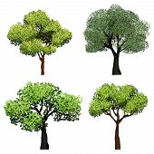 Trees Realistic. Nature Garden Botanical Collection Trees With Green Leaves Vector Illustrations. Br poster