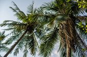 Vintage Toned Different Palm Trees, Vacation Concept. Palm Grove On The Island. Coastal Lawn Under A poster
