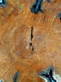 Stump Of Oak, Section Of The Trunk With Annual Rings, Tree Trunk Background Texture poster