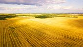 Harvester Machine Working In Field. Agriculture. Aerial View From Above. poster