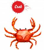 Crab Isolated On White Background, Watercolor Illustration. Big Red Crab Watercolor Illustration poster