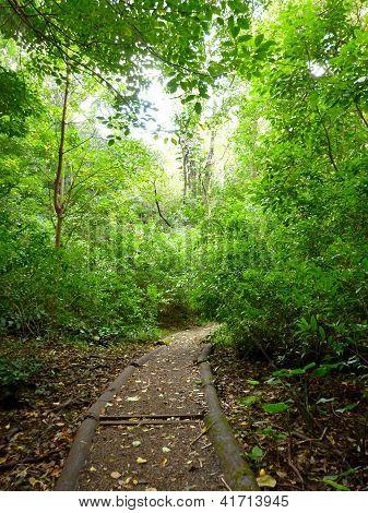 Moleka Trail On Tantalus