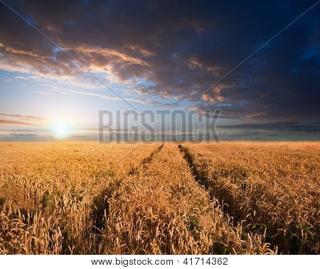 Stunning Wheatfield Landscape Summer Sunset