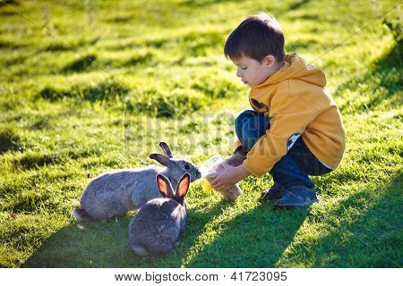 Little boy feeding two rabbits in farm