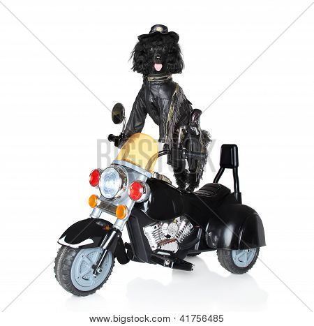 Dog Riding On A Police Motorcycle
