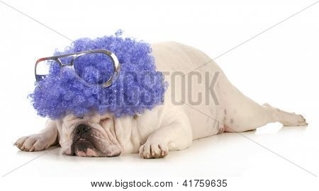 dog clown - bulldog dressed up like a clown with purple wig