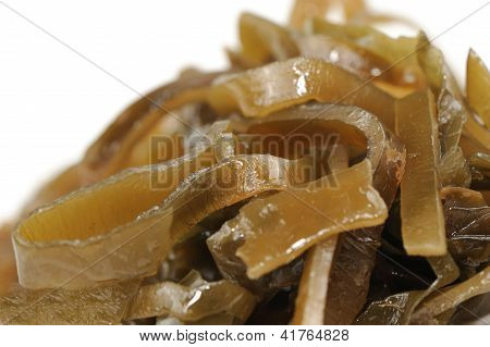 Laminaria (Kelp) Seaweed Close-up