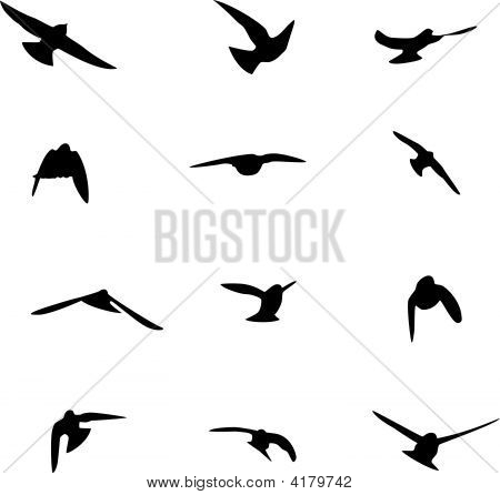 Swallow Silhouettes