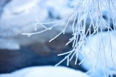 foto of spiky plants  - Small branch covered with hoarfrost in february cold day - JPG