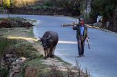 YUANYANG - DECEMBER 18: A farmer walks with his buffalo to return home after work in Yuan Yang Count