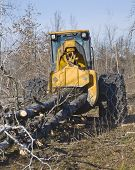 image of skidder  - Logging skidder hauling freshly cut trees out of the forest - JPG