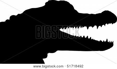 American Alligator 3_.eps