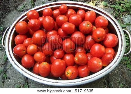 Pan Of Roma Tomatoes
