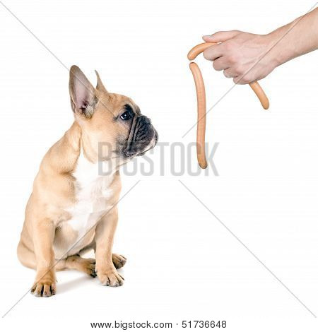 Sausage For The Dog