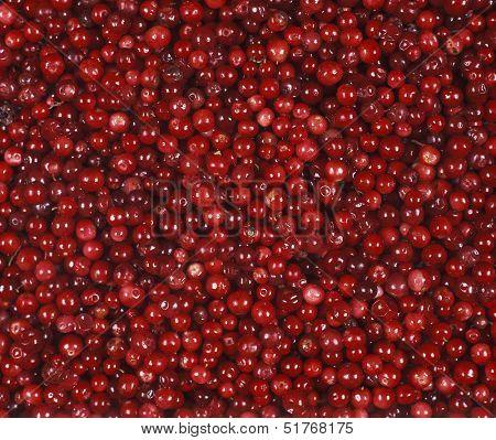 Full Frame of Lingonberries