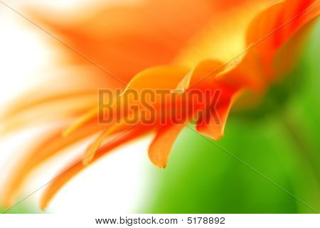 Abstract Flower Petals
