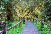 Hiking Trail In Hoh Rainforest