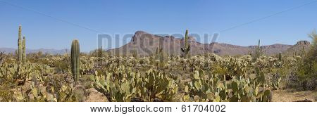 180 degree panorama of saguaro national park, arizona