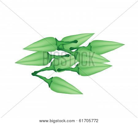 Stack Of Fresh Zucchini Blossoms On White Background
