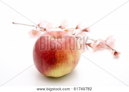 Fresh Red Apple with Flower Branch on white background