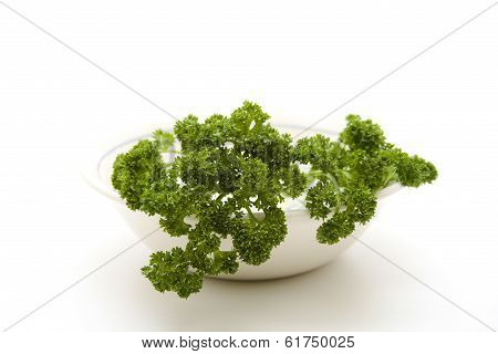 Green parsley with porcelain bowl