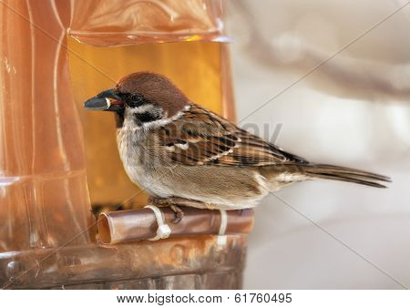 Sparrow in winter day