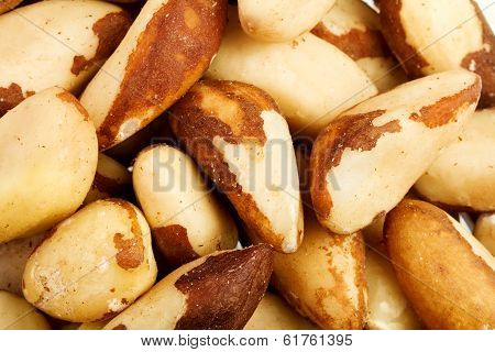 Close up of the Brazil nuts