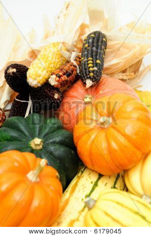 Indian Corn And Squash