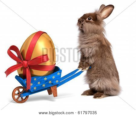 Funny Easter Rabbit With A Blue Wheelbarrow And Golden Egg