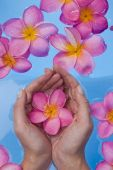stock photo of healing hands  - Womans hands cupping a pink frangipani flower in a blue pool - JPG