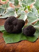 stock photo of truffle  - black truffle over leaf on wood background - JPG