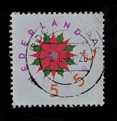 Netherlands Stamp Shows Red Flower