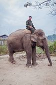 Unidentified Mahout Riding An Elephant, Chitwan National Park, Nepal