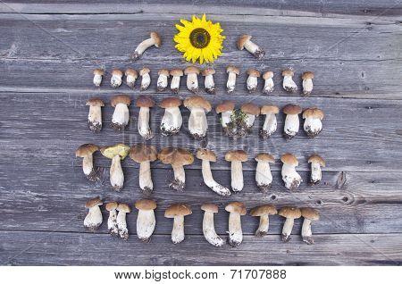 Cep Boletus Fungi Harvest On Wooden Background