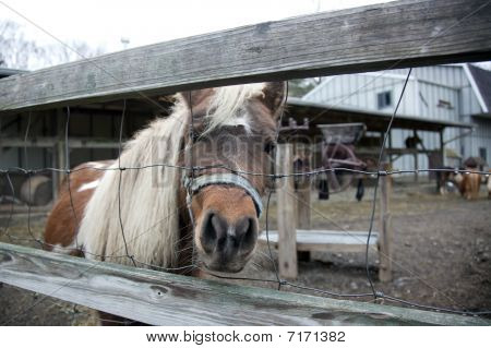 Pony Behind The Fence