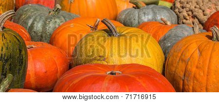 Panorama Of Orange, Green And Red Pumpkins