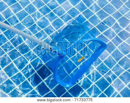 The Blue Picker And Leaves On Pool Surface For Cleaning And Maintenance Swimming Pool.
