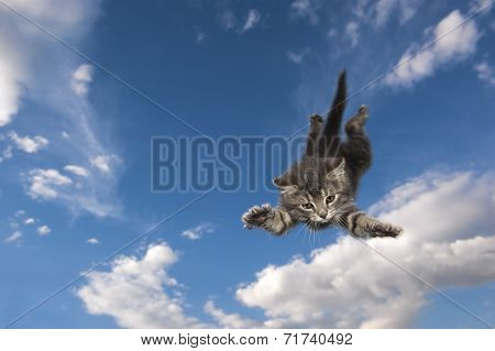 Young kitten jumps