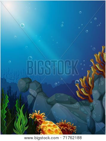 Illustration of the corals and seaweeds under the sea