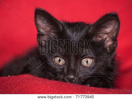 Adorable black kitten peeking, on red blanket
