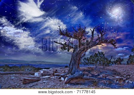 Desert Tree at night Elements of this image furnished by NASA