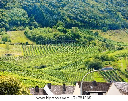 Vineyard On Green Hills In Moselle Region