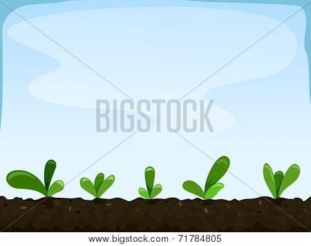 Illustration Featuring Seedlings Planted Inches Apart