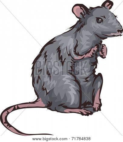 Illustration Featuring a Rat