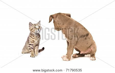 Kitten and puppy looking at each other