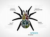 foto of venomous animals  - Animal concept infographic template with spider made out of puzzle pieces - JPG