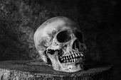 picture of skull bones  - Still life with ideas about art skull in black and white - JPG