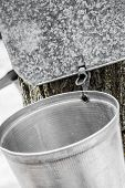stock photo of spigot  - Maple Sap buckets Closeup on trees in spring - JPG